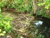 Wasserstand sinkt durch Biberbau