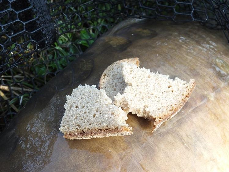 Angeln mit Brot auf Karpfen
